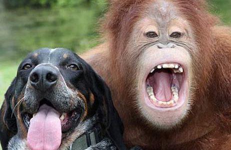 O Burro, o Cachorro, o Macaco e o Homem