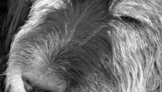 O cachorro velho – fábula :)